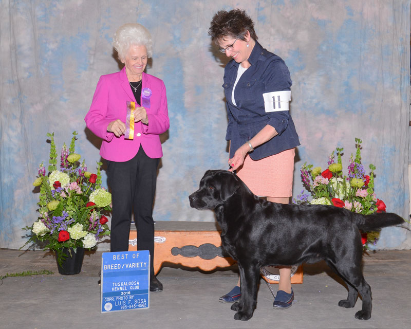 Best of Breed April 19, 2016 Tuscaloosa Kennel Club