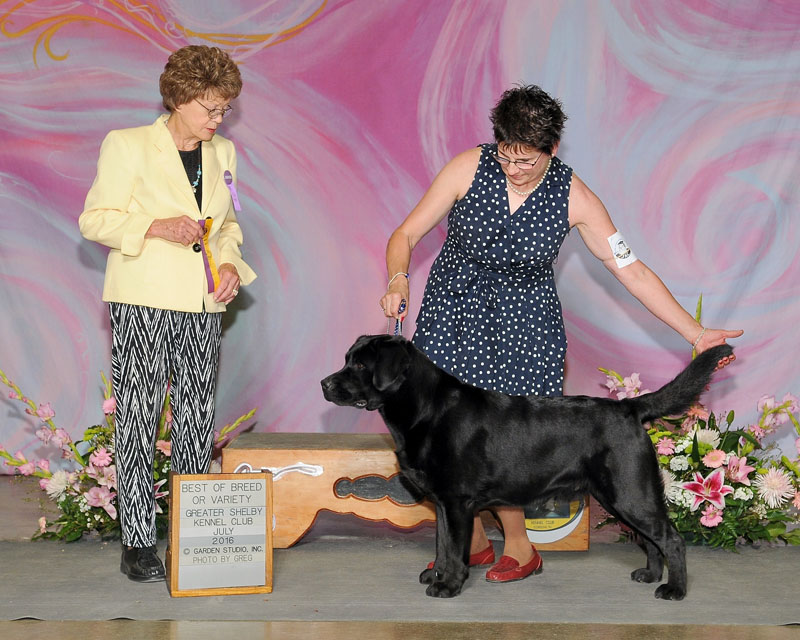 Best of Breedor Variety, May 1, 2016 Maury County Kennel Club